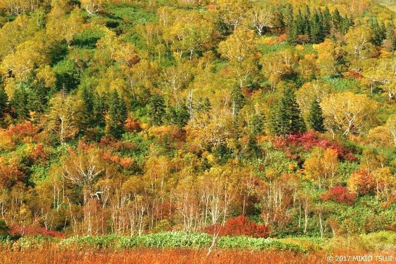 絶景探しの旅 - 0367 高原の秋の誘い (栂池自然園/長野県 小谷村)