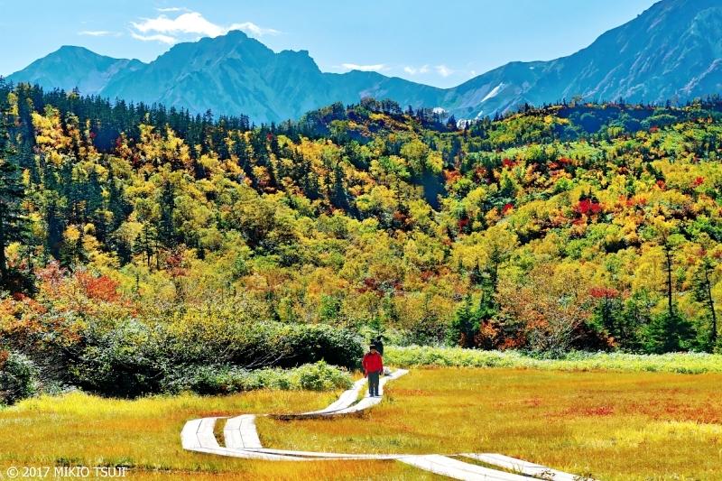 絶景探しの旅 - 0368 秋の栂池高原遊歩道 (栂池自然園/長野県 小谷村)