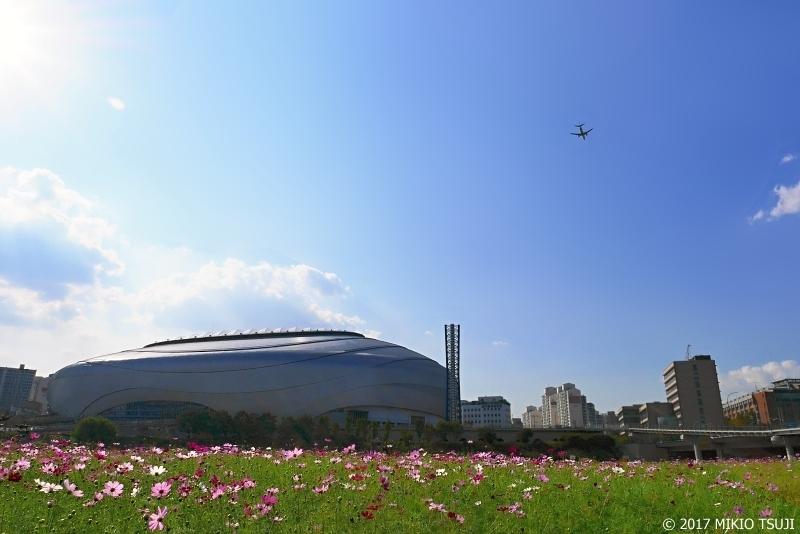 絶景探しの旅 - 0389 秋桜とソウルドーム球場 (ソウル市 九老区)