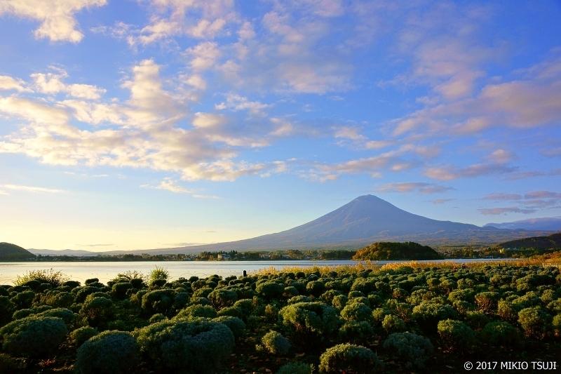 絶景探しの旅 - 0402 朝日を浴びる富士と大石公園 (山梨県 富士河口湖町)