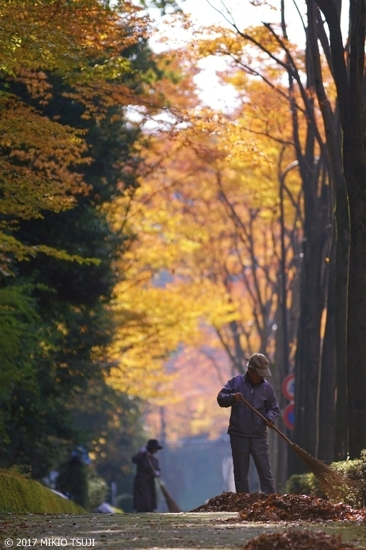 絶景探しの旅 - 0425 落ち葉の歩道 (東京都 八王子市)
