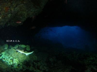 1108~宮古ツアー サメと洞窟